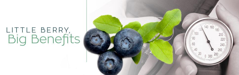 Little Berry, Big Benefits
