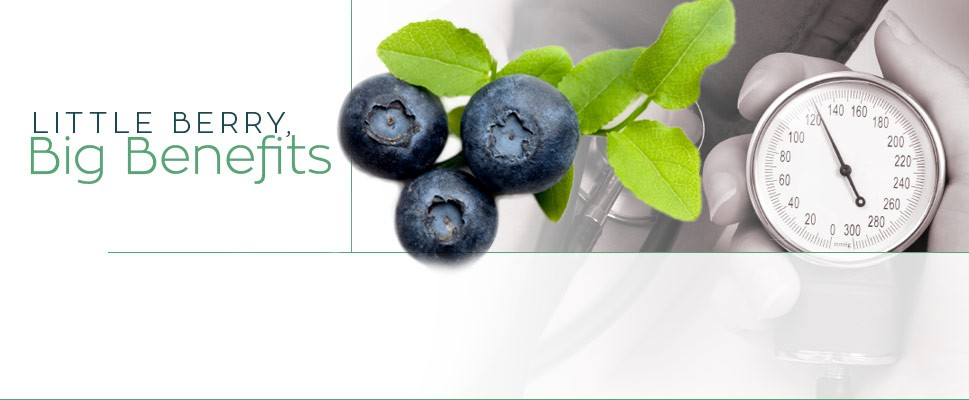 Little Berry, Big Benefits